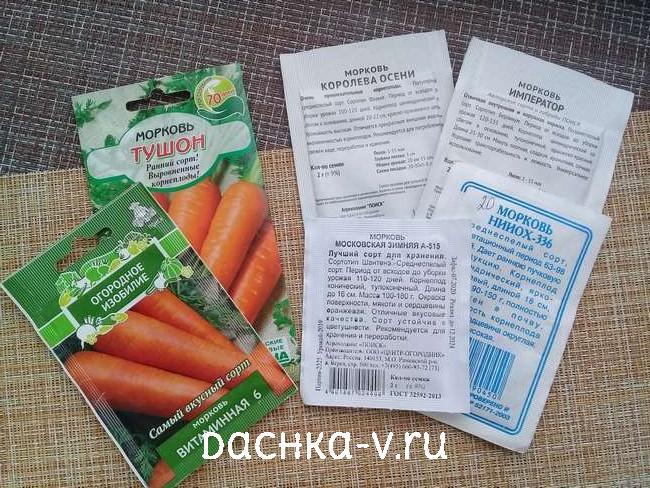 Выращиваем морковь в Подмосковье