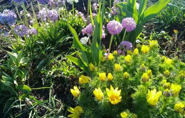 Садовые цветы каталог саженцев